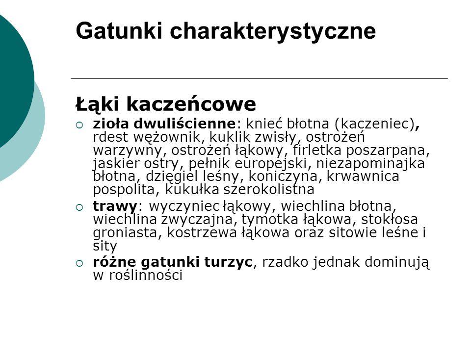 Gatunki charakterystyczne Łąki kaczeńcowe :  zioła dwuliścienne: knieć błotna (kaczeniec), rdest wężownik, kuklik zwisły, ostrożeń warzywny, ostrożeń łąkowy, firletka poszarpana, jaskier ostry, pełnik europejski, niezapominajka błotna, dzięgiel leśny, koniczyna, krwawnica pospolita, kukułka szerokolistna  trawy: wyczyniec łąkowy, wiechlina błotna, wiechlina zwyczajna, tymotka łąkowa, stokłosa groniasta, kostrzewa łąkowa oraz sitowie leśne i sity  różne gatunki turzyc, rzadko jednak dominują w roślinności