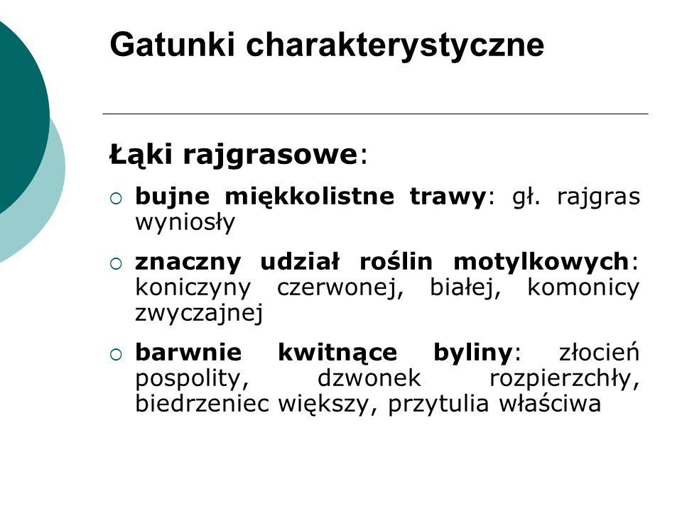 Gatunki charakterystyczne Łąki rajgrasowe:  bujne miękkolistne trawy: gł.