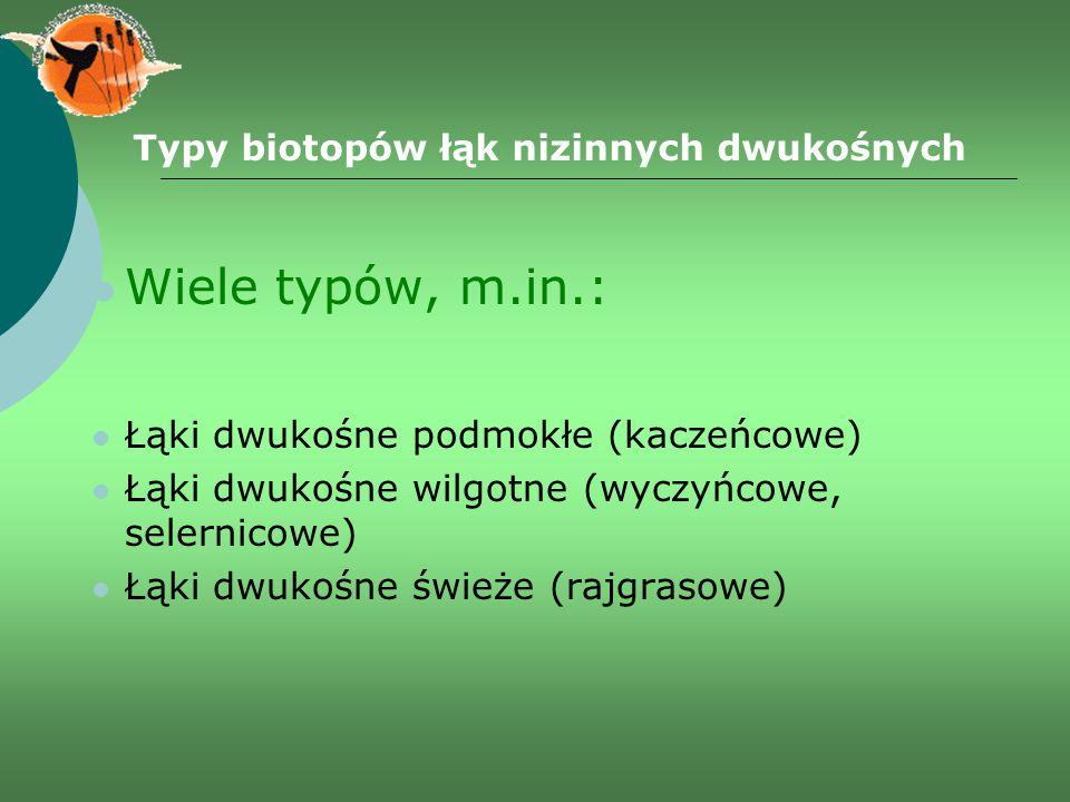 Typy biotopów łąk nizinnych dwukośnych Wiele typów, m.in.: Łąki dwukośne podmokłe (kaczeńcowe) Łąki dwukośne wilgotne (wyczyńcowe, selernicowe) Łąki d