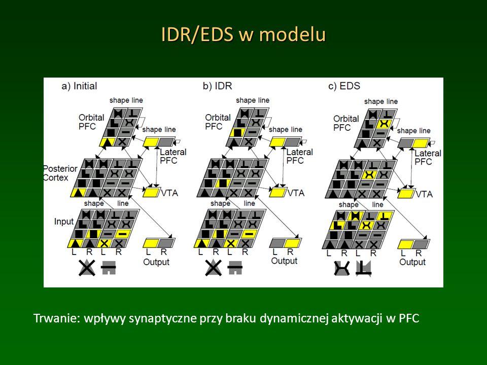 IDR/EDS w modelu Trwanie: wpływy synaptyczne przy braku dynamicznej aktywacji w PFC