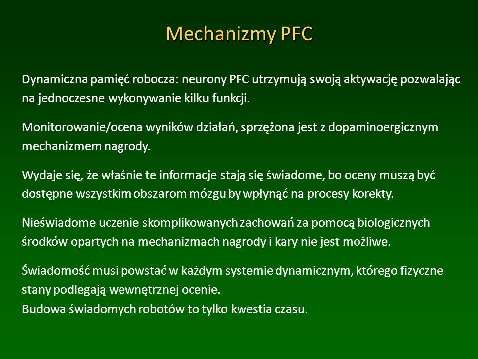 Mechanizmy PFC Dynamiczna pamięć robocza: neurony PFC utrzymują swoją aktywację pozwalając na jednoczesne wykonywanie kilku funkcji.