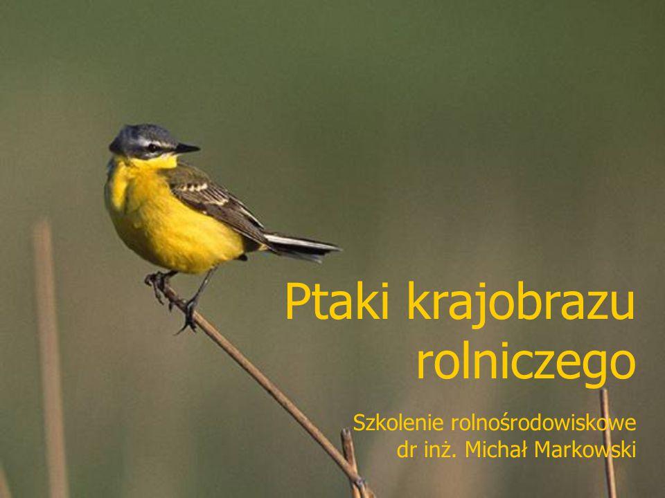 Ptaki krajobrazu rolniczego Szkolenie rolnośrodowiskowe dr inż. Michał Markowski