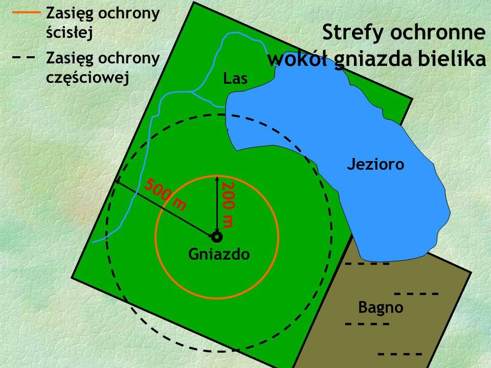  Gniazdo Las 200 m 500 m Zasięg ochrony ścisłej Zasięg ochrony częściowej - - - - - - Bagno Jezioro Strefy ochronne wokół gniazda bielika
