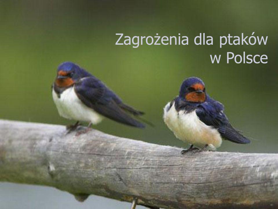 Zagrożenia dla ptaków w Polsce