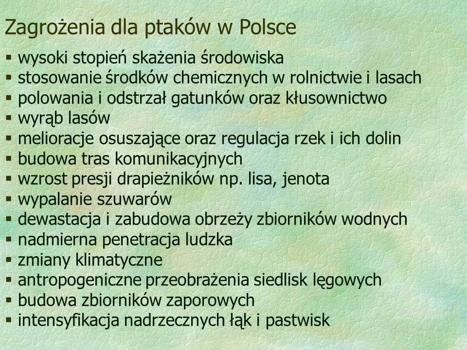Zagrożenia dla ptaków w Polsce  wysoki stopień skażenia środowiska  stosowanie środków chemicznych w rolnictwie i lasach  polowania i odstrzał gatu