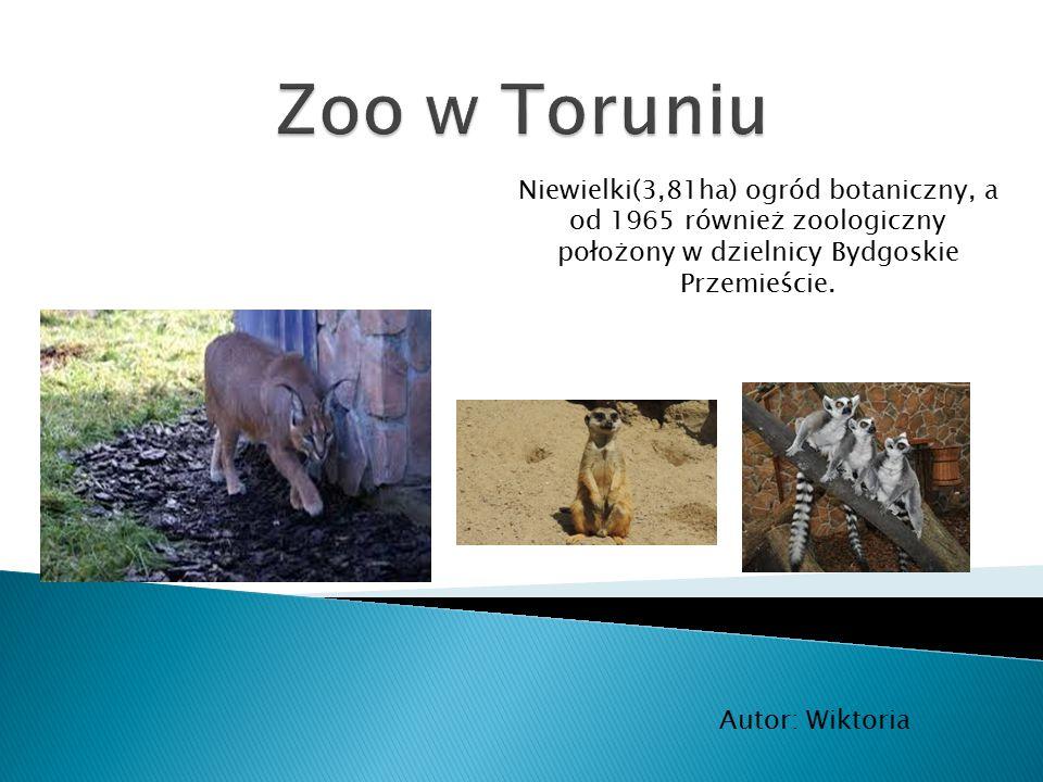 Niewielki(3,81ha) ogród botaniczny, a od 1965 również zoologiczny położony w dzielnicy Bydgoskie Przemieście. Autor: Wiktoria