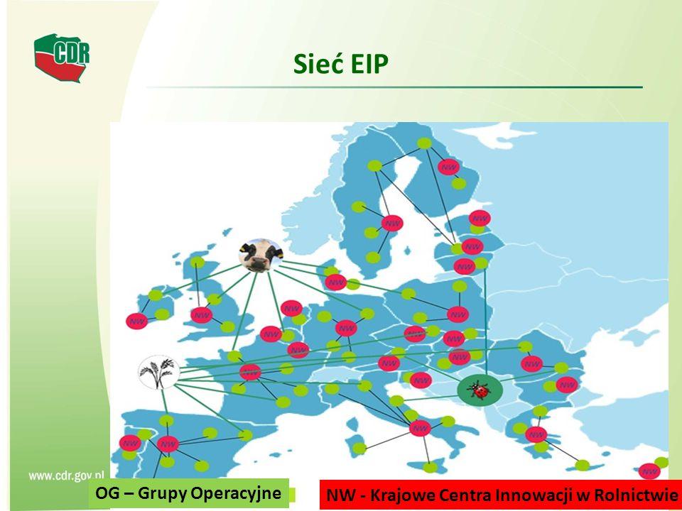 Sieć EIP 13 NW - Krajowe Centra Innowacji w Rolnictwie OG – Grupy Operacyjne
