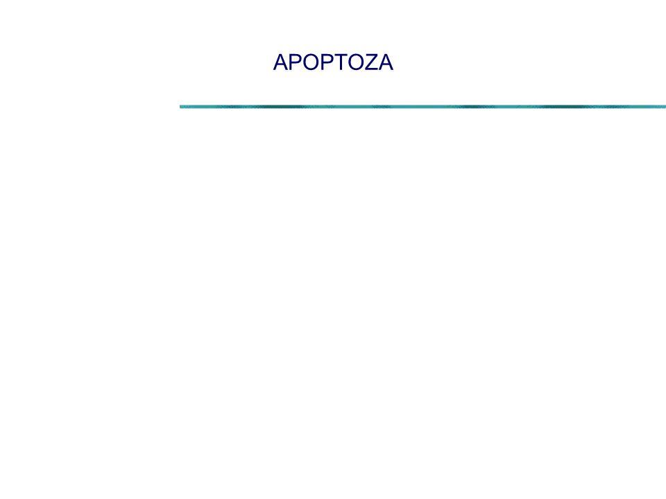 APOPTOZA