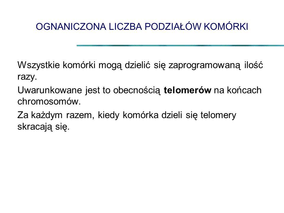 RAK JELITA GRUBEGO – KOLONOSKOPIA 2008 Wydatki: 13 848 773,79 zł.