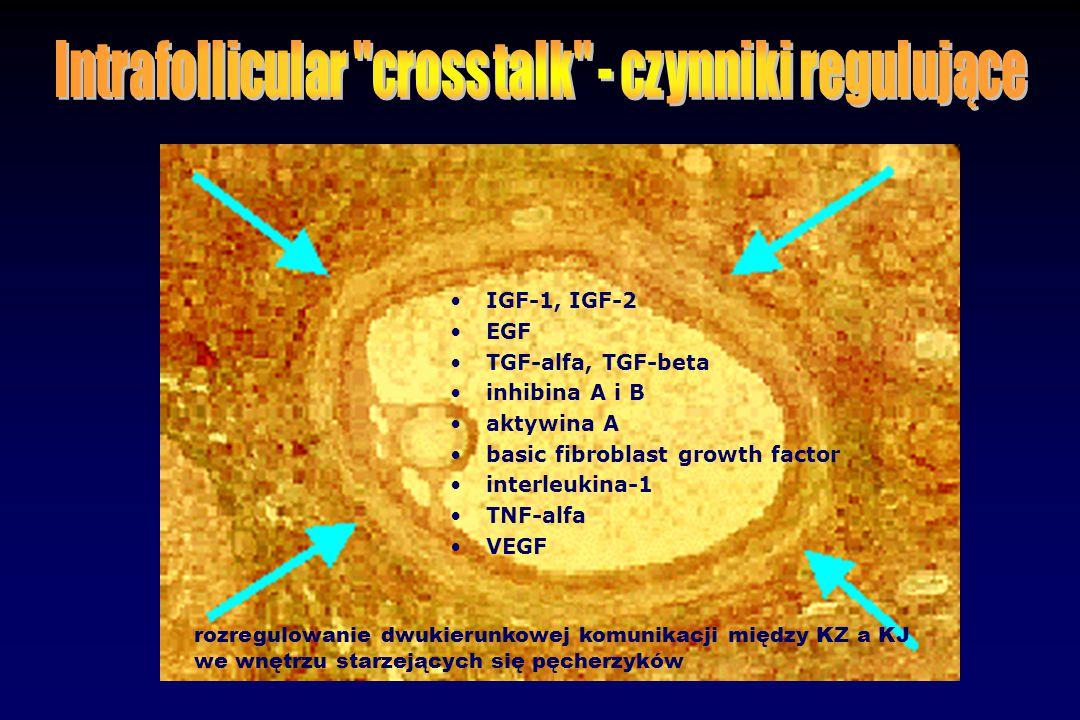 IGF-1, IGF-2 EGF TGF-alfa, TGF-beta inhibina A i B aktywina A basic fibroblast growth factor interleukina-1 TNF-alfa VEGF rozregulowanie dwukierunkowe