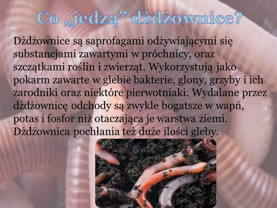 Dżdżownice są saprofagami odżywiającymi się substancjami zawartymi w próchnicy, oraz szczątkami roślin i zwierząt. Wykorzystują jako pokarm zawarte w