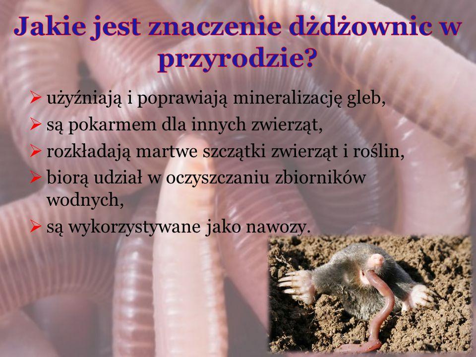  użyźniają i poprawiają mineralizację gleb,  są pokarmem dla innych zwierząt,  rozkładają martwe szczątki zwierząt i roślin,  biorą udział w oczys