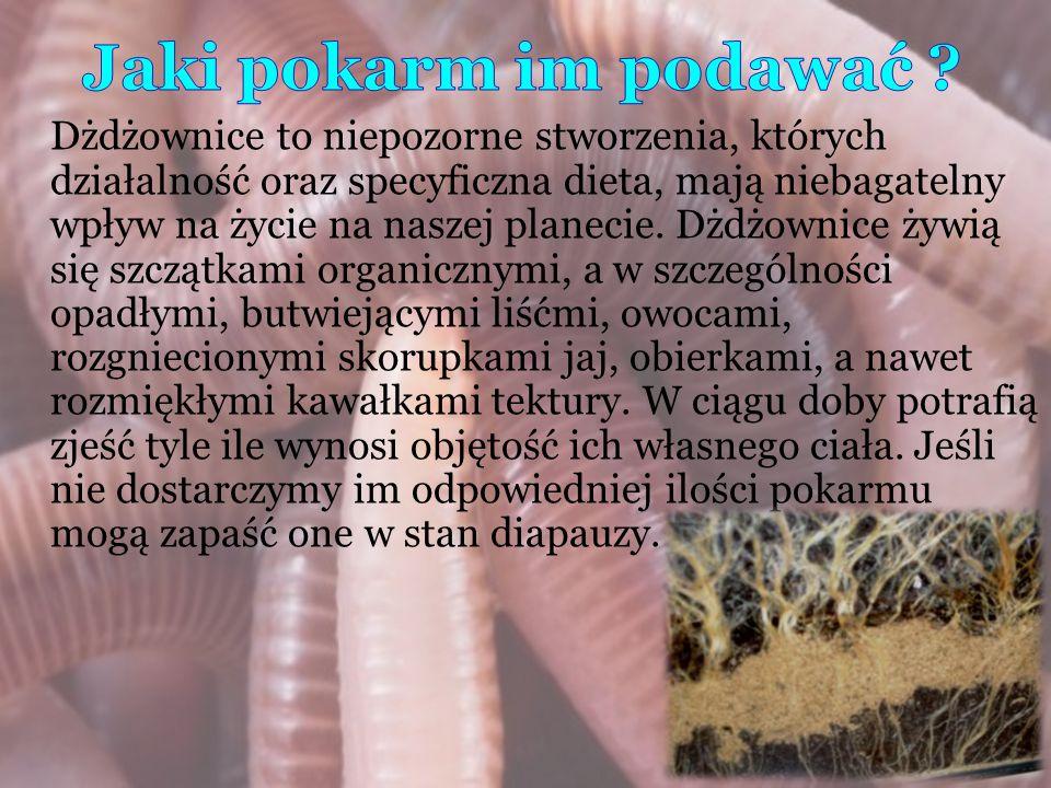 Dżdżownice to niepozorne stworzenia, których działalność oraz specyficzna dieta, mają niebagatelny wpływ na życie na naszej planecie. Dżdżownice żywią