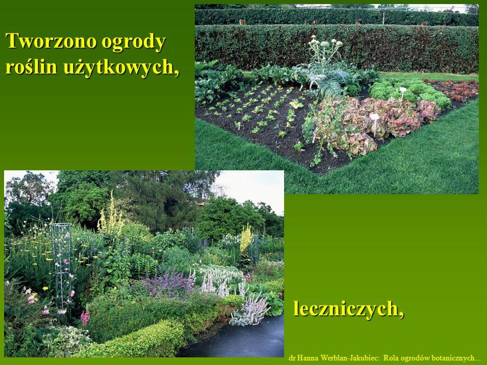 Tworzono ogrody roślin użytkowych, leczniczych,