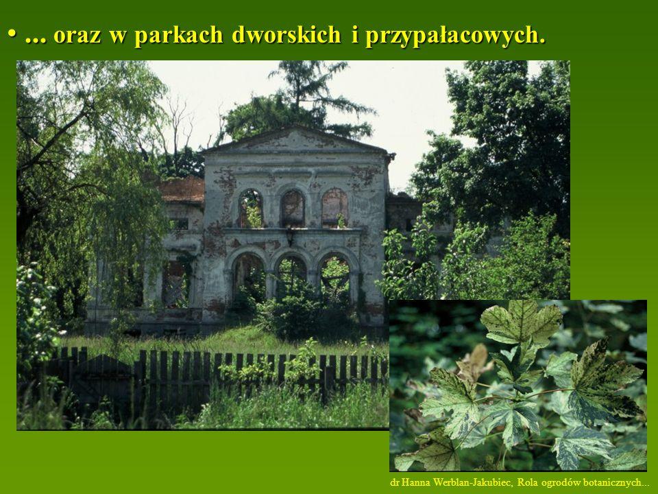 ...oraz w parkach dworskich i przypałacowych.... oraz w parkach dworskich i przypałacowych.