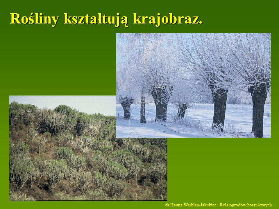 Rośliny kształtują krajobraz.