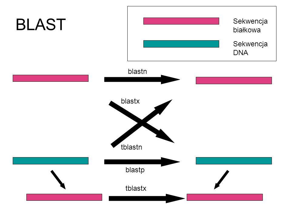 BLAST Sekwencja białkowa Sekwencja DNA blastn blastp blastx tblastn tblastx