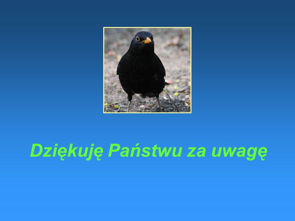 Serdecznie zapraszamy Państwa do odwiedzania strony internetowej projektu BIRDSMOND www.birdsmond.pwsztar.edu.pl Trznadel (łac. Emberizza citrinella)