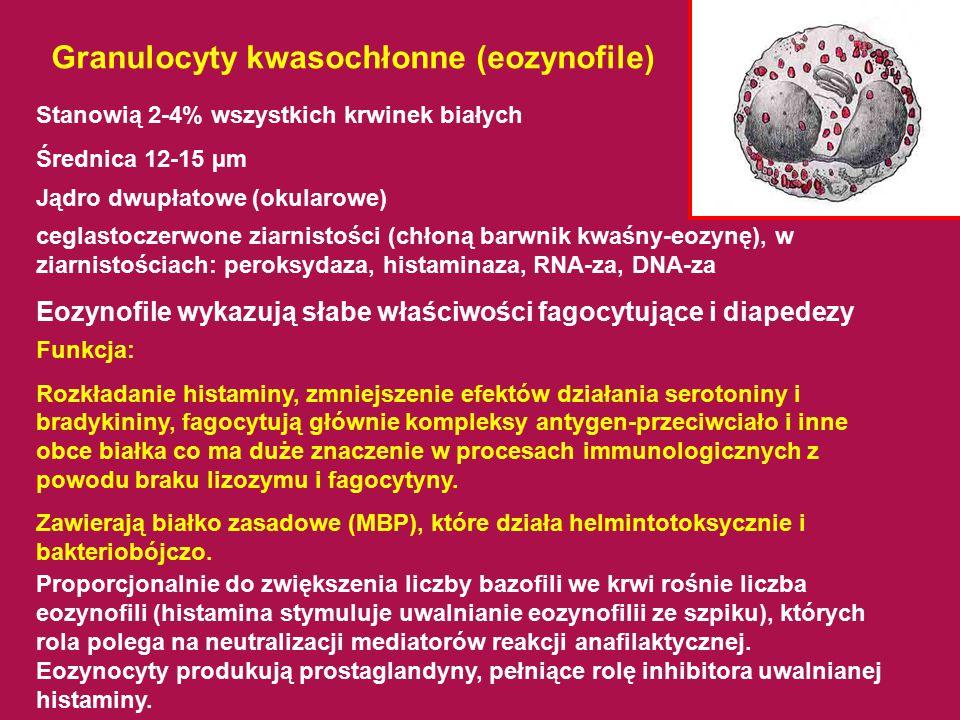 Granulocyty kwasochłonne (eozynofile) Stanowią 2-4% wszystkich krwinek białych Średnica 12-15 µm ceglastoczerwone ziarnistości (chłoną barwnik kwaśny-