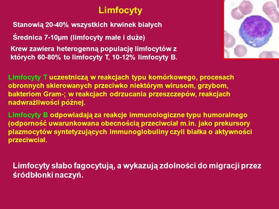 Limfocyty Stanowią 20-40% wszystkich krwinek białych Średnica 7-10µm (limfocyty małe i duże) Limfocyty słabo fagocytują, a wykazują zdolności do migra