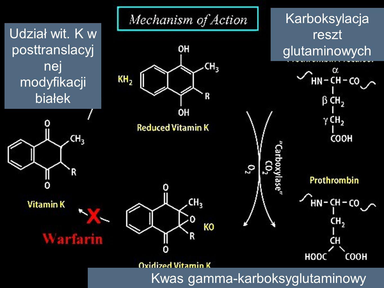 Karboksylacja reszt glutaminowych Kwas gamma-karboksyglutaminowy Udział wit. K w posttranslacyj nej modyfikacji białek