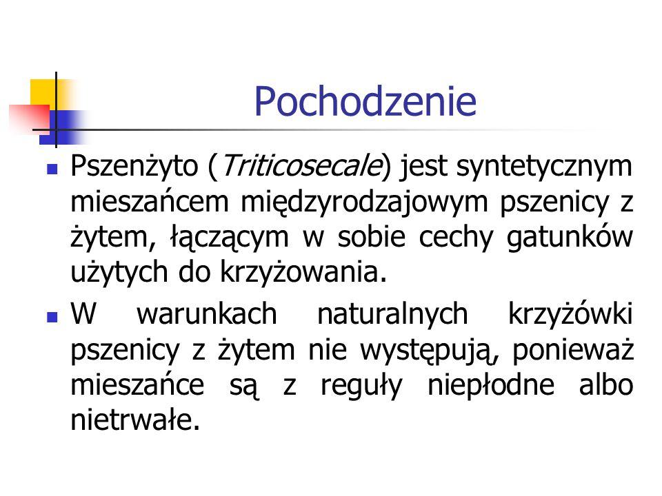 Pochodzenie Pszenżyto (Triticosecale) jest syntetycznym mieszańcem międzyrodzajowym pszenicy z żytem, łączącym w sobie cechy gatunków użytych do krzyż