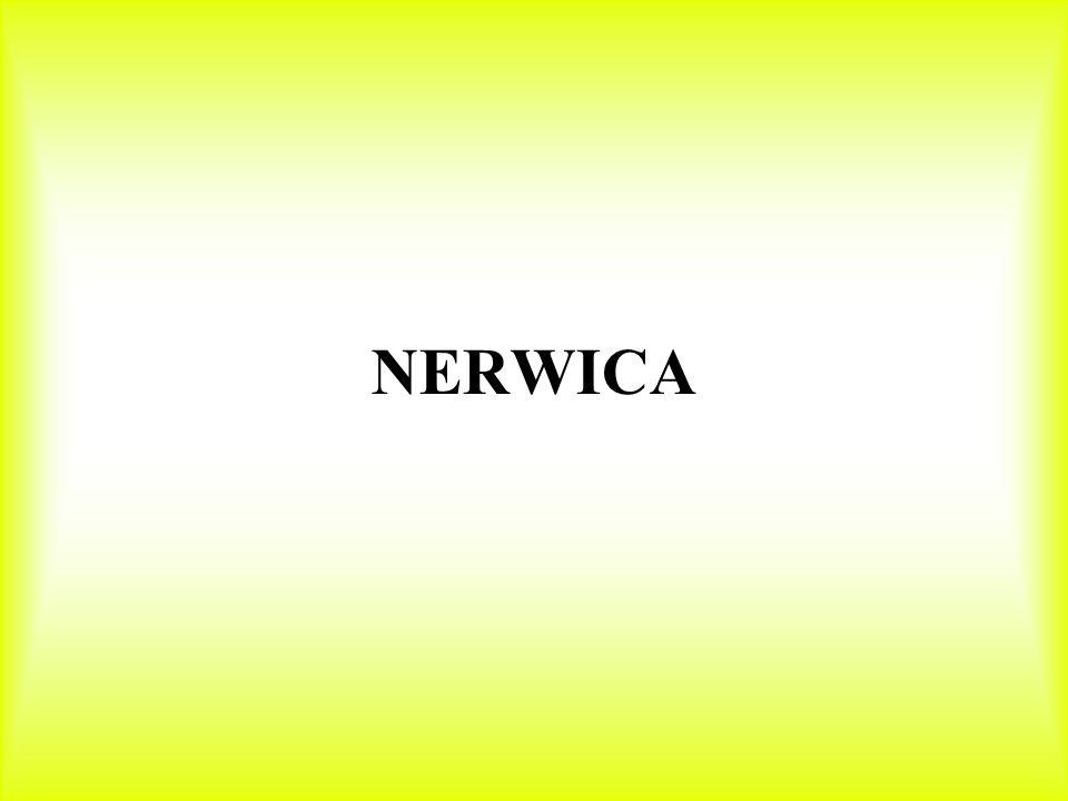 NERWICA