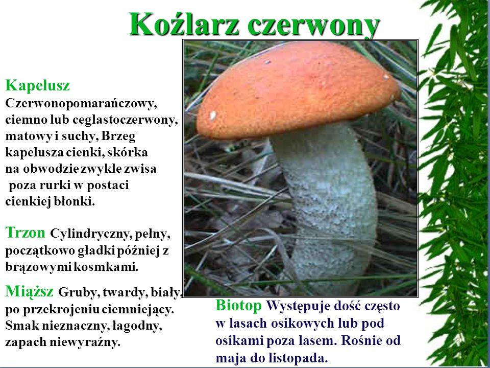 Biotop Borowik szlachetny występuje zarówno w lasach iglastych, liściastych jak i mieszanych.