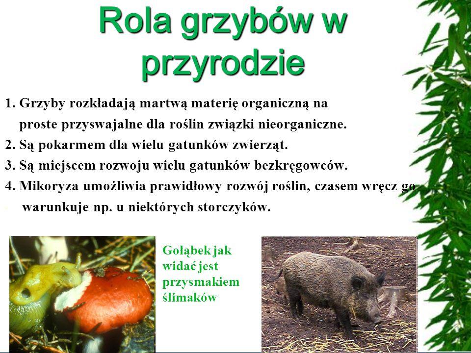 Rola grzybów w przyrodzie 1.
