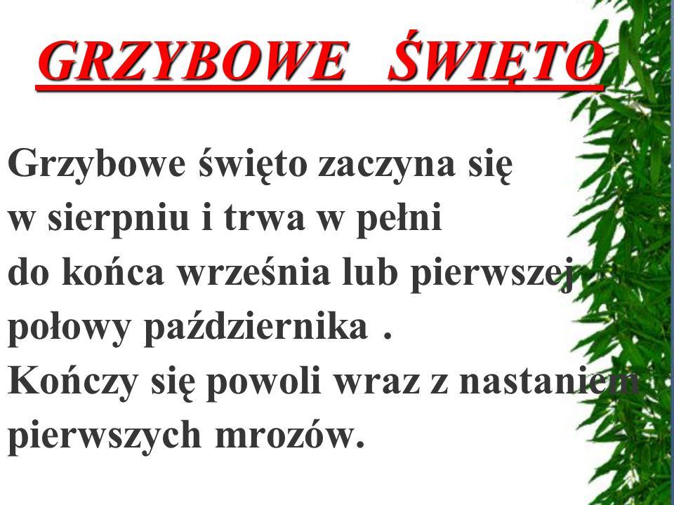 Maślanka wiązkowa Wilgotnica stożkowata GRZYBY TRUJĄCE !!!