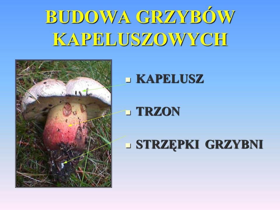 Fałszywe mity na temat grzybów Fałszywe mity na temat grzybów Grzyby trujące po posoleniu żółkną.