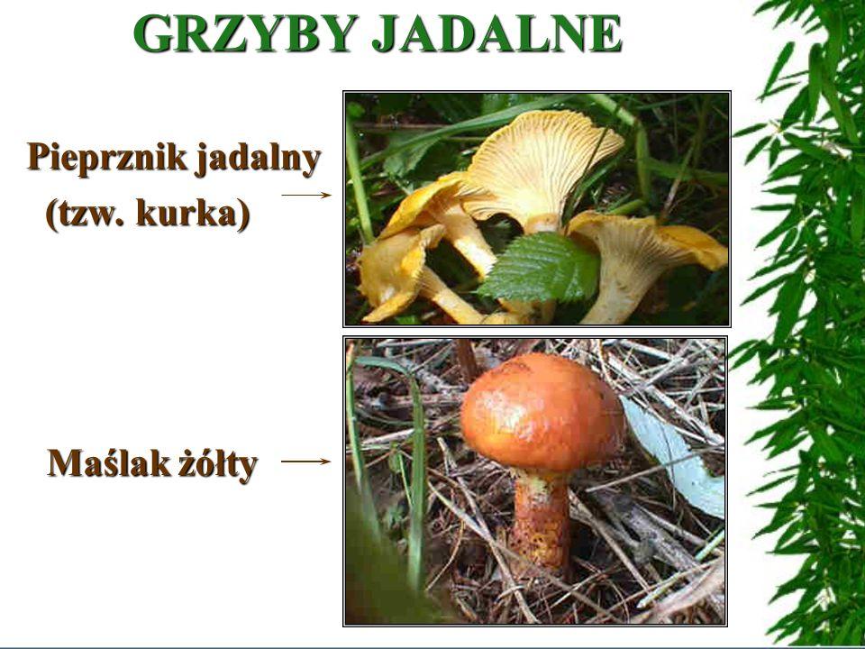 GRZYBY JADALNETRUJĄCE PODZIAŁ GRZYBÓW Niektóre grzyby są jadalne, inne bardzo niebezpieczne, bo siln i e trujące.