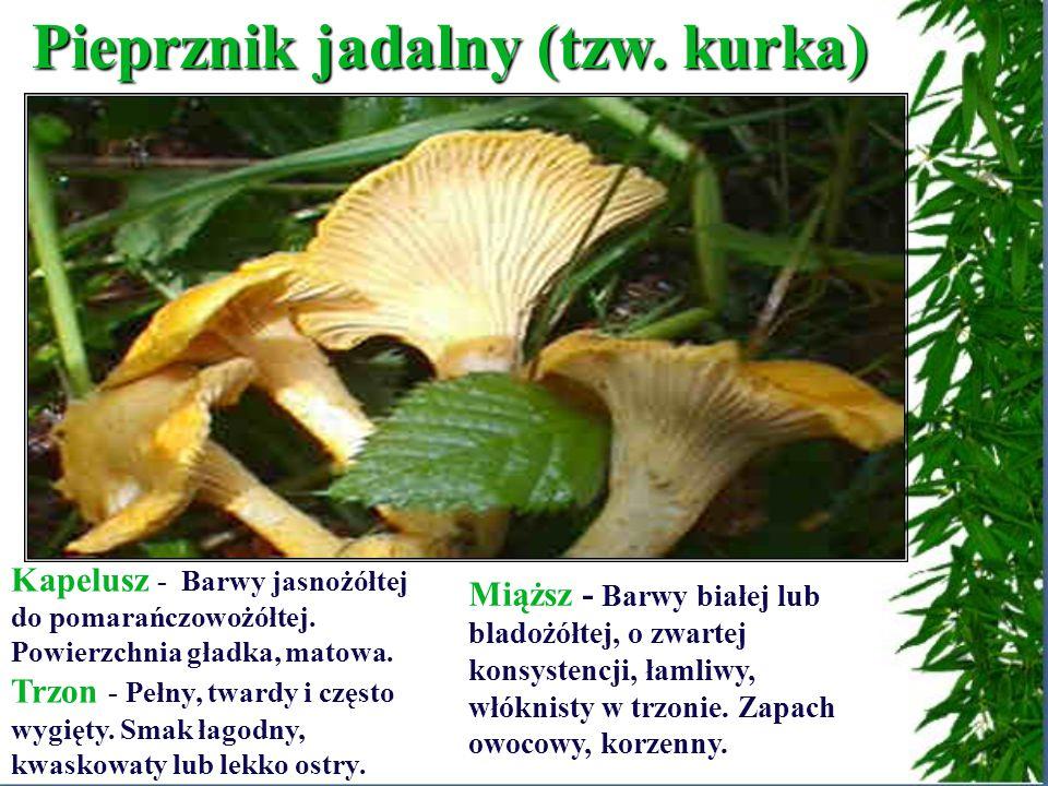 Pieprznik jadalny (tzw.kurka) Kapelusz - Barwy jasnożółtej do pomarańczowożółtej.