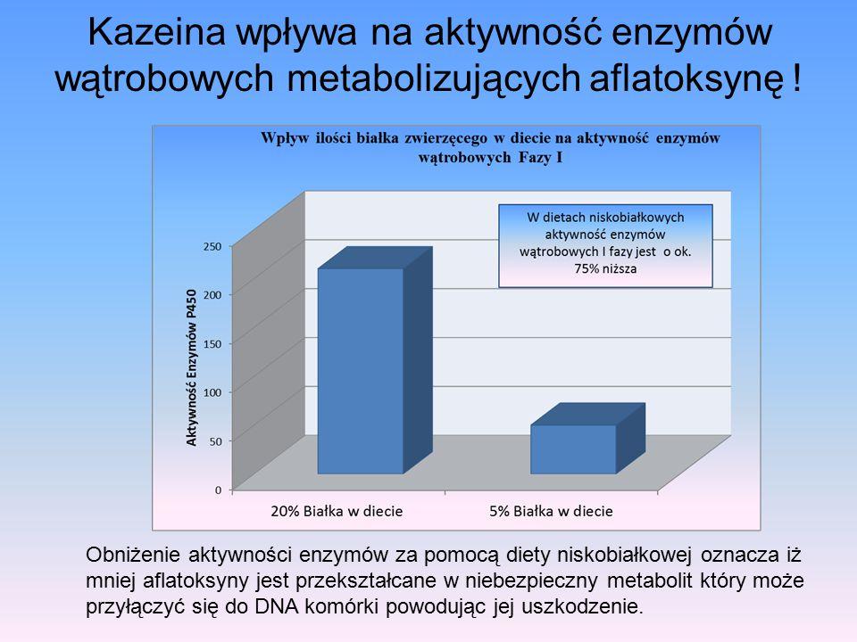 Kazeina wpływa na aktywność enzymów wątrobowych metabolizujących aflatoksynę ! Obniżenie aktywności enzymów za pomocą diety niskobiałkowej oznacza iż