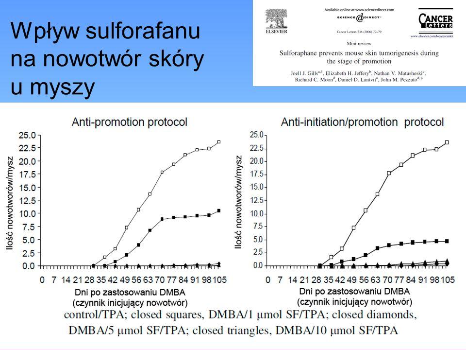 Wpływ sulforafanu na nowotwór skóry u myszy