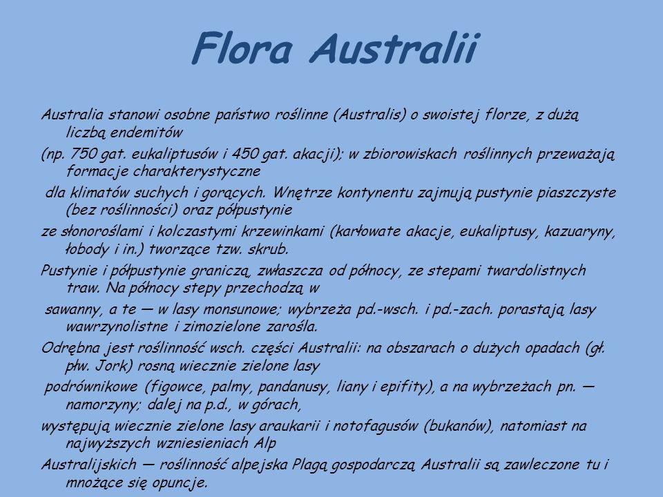 Flora Australii Australia stanowi osobne państwo roślinne (Australis) o swoistej florze, z dużą liczbą endemitów (np. 750 gat. eukaliptusów i 450 gat.