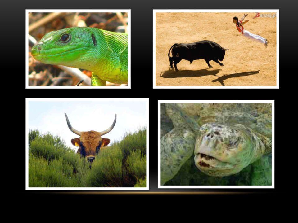 FAUNA Podobnie jak w przypadku flory tak i w faunie znajdujemy tu przedstawicieli środkowoeuropejskiej i północnoafrykańskiej fauny.