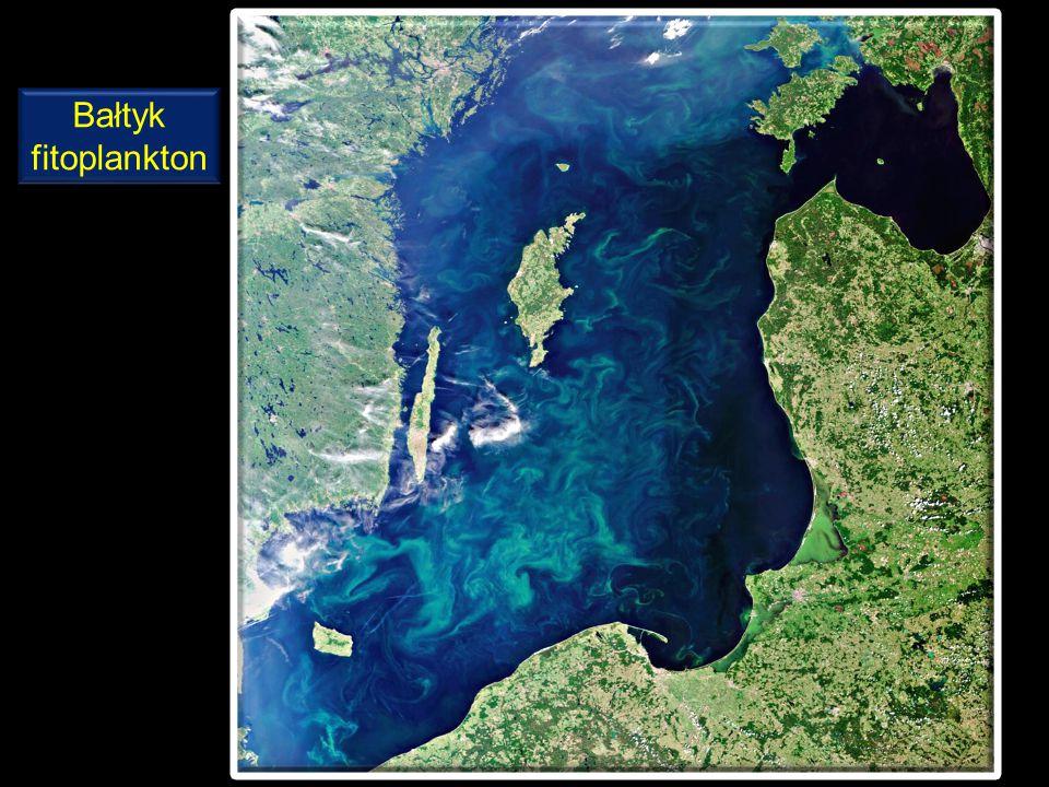 Polska montaż z obrazów satelity Landsat