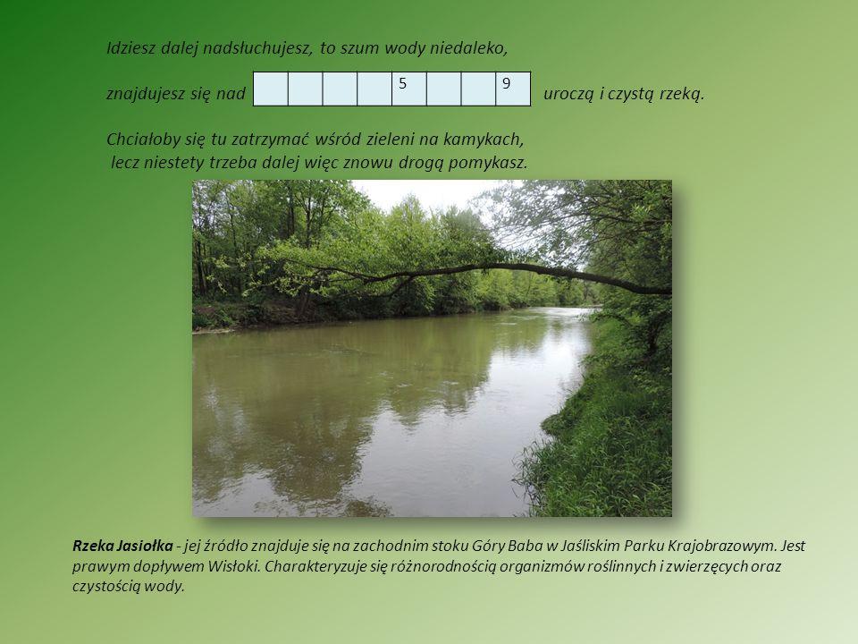 Idziesz dalej nadsłuchujesz, to szum wody niedaleko, znajdujesz się nad uroczą i czystą rzeką. Chciałoby się tu zatrzymać wśród zieleni na kamykach, l