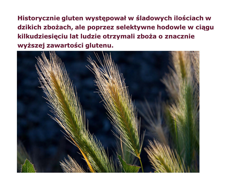Historycznie gluten występował w śladowych ilościach w dzikich zbożach, ale poprzez selektywne hodowle w ciągu kilkudziesięciu lat ludzie otrzymali zb