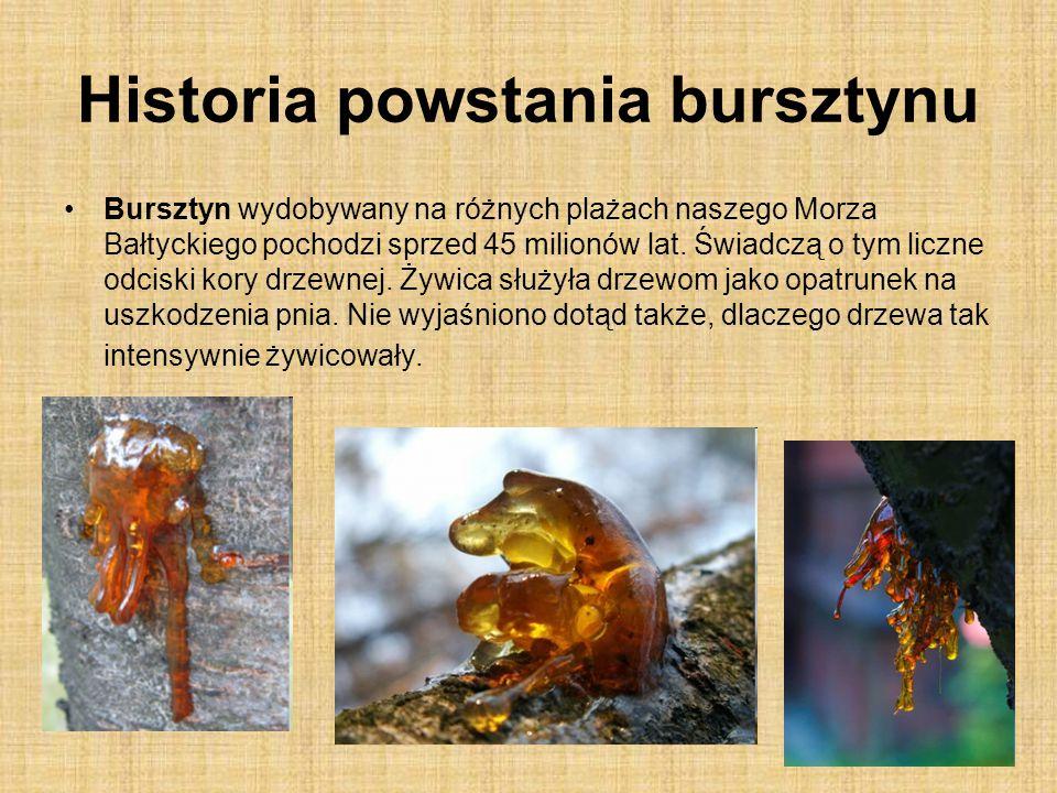 Historia powstania bursztynu Bursztyn wydobywany na różnych plażach naszego Morza Bałtyckiego pochodzi sprzed 45 milionów lat. Świadczą o tym liczne o