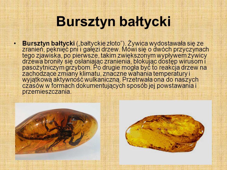 """Bursztyn bałtycki Bursztyn bałtycki (""""bałtyckie złoto""""). Żywica wydostawała się ze zranień, pęknięć pni i gałęzi drzew. Mówi się o dwóch przyczynach t"""