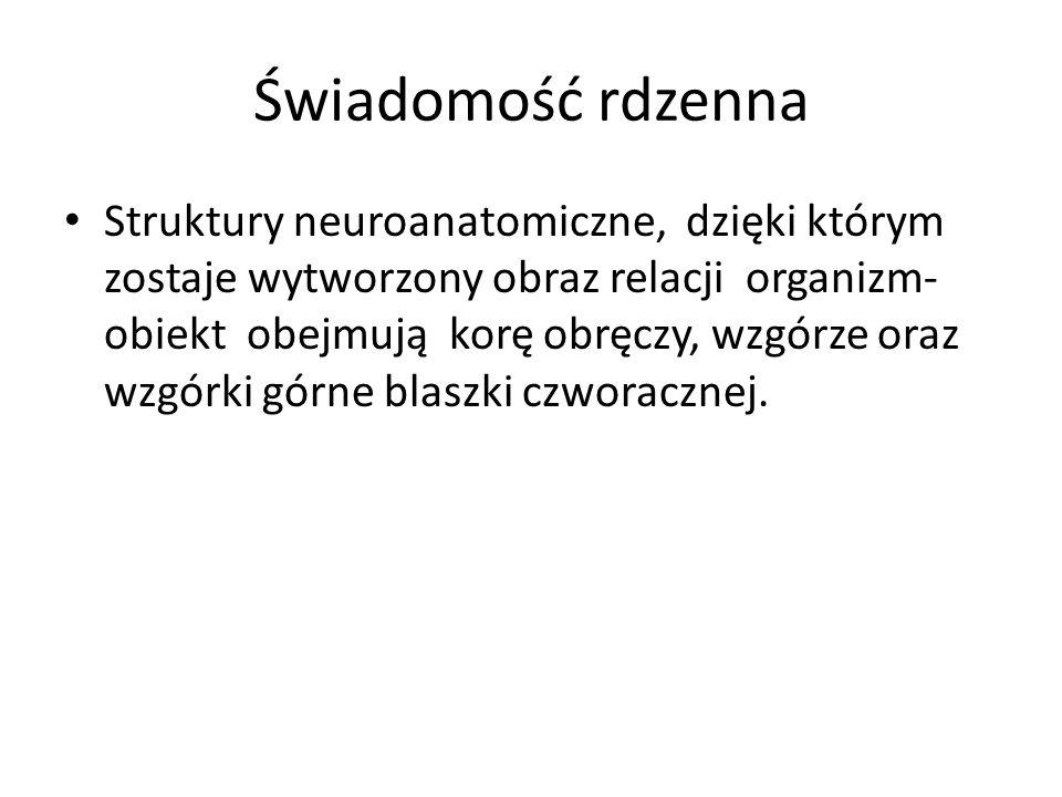 Świadomość rdzenna Struktury neuroanatomiczne, dzięki którym zostaje wytworzony obraz relacji organizm- obiekt obejmują korę obręczy, wzgórze oraz wzg