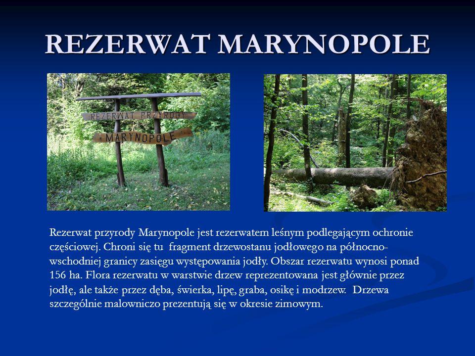 REZERWAT MARYNOPOLE Rezerwat przyrody Marynopole jest rezerwatem leśnym podlegającym ochronie częściowej. Chroni się tu fragment drzewostanu jodłowego