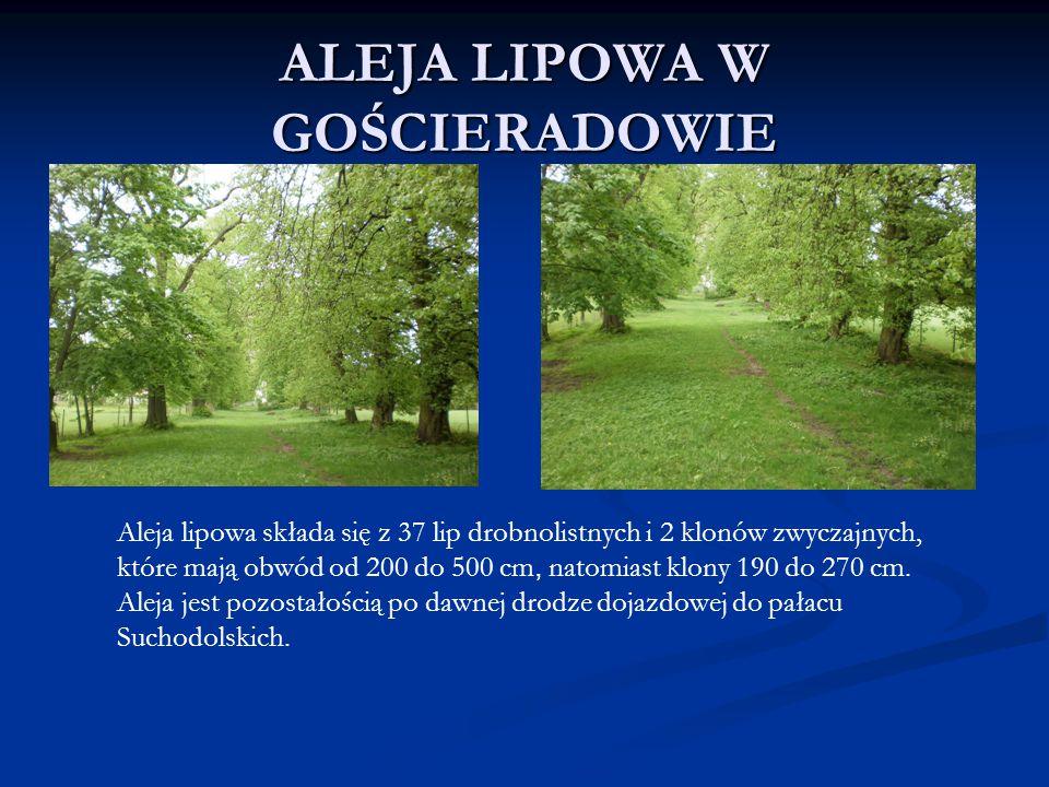 ALEJA LIPOWA W GOŚCIERADOWIE Aleja lipowa składa się z 37 lip drobnolistnych i 2 klonów zwyczajnych, które mają obwód od 200 do 500 cm, natomiast klon