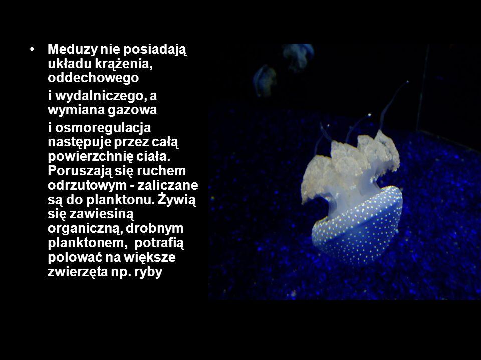 Meduzy nie posiadają układu krążenia, oddechowego i wydalniczego, a wymiana gazowa i osmoregulacja następuje przez całą powierzchnię ciała. Poruszają
