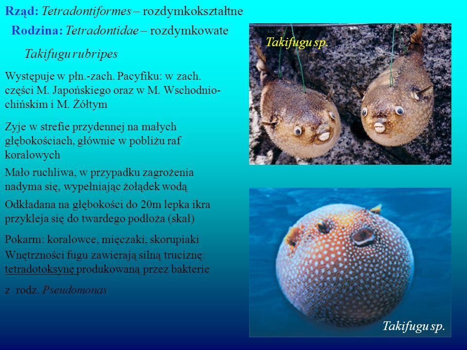 Rząd: Tetradontiformes – rozdymkokształtne Rodzina: Tetradontidae – rozdymkowate Takifugu rubripes Wnętrzności fugu zawierają silną truciznę: tetradot