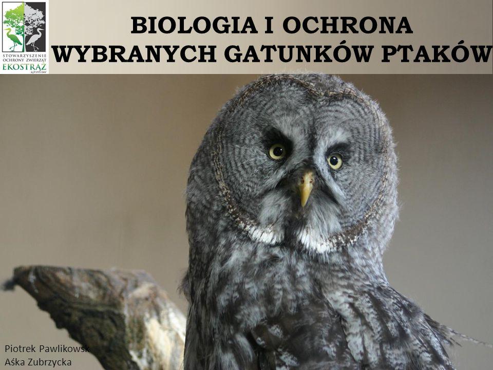 BIOLOGIA I OCHRONA WYBRANYCH GATUNKÓW PTAKÓW Piotrek Pawlikowsk Aśka Zubrzycka