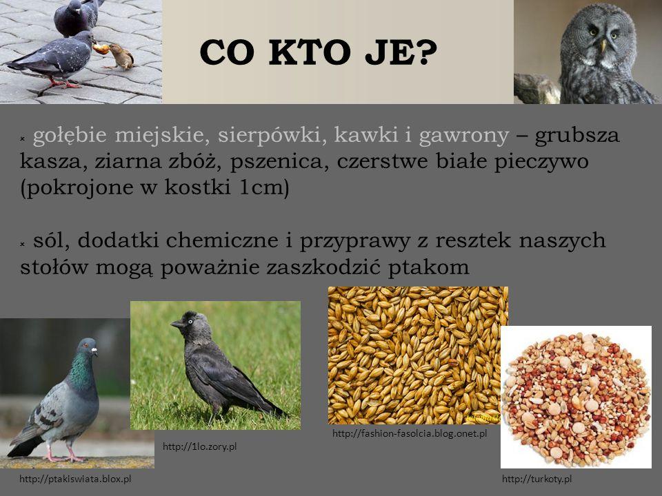 CO KTO JE?  gołębie miejskie, sierpówki, kawki i gawrony – grubsza kasza, ziarna zbóż, pszenica, czerstwe białe pieczywo (pokrojone w kostki 1cm)  s
