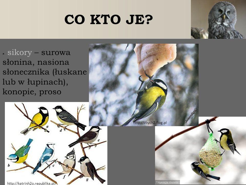  sikory – surowa słonina, nasiona słonecznika (łuskane lub w łupinach), konopie, proso http://zbych2.flog.pl CO KTO JE? http://katrinh2o.republika.pl